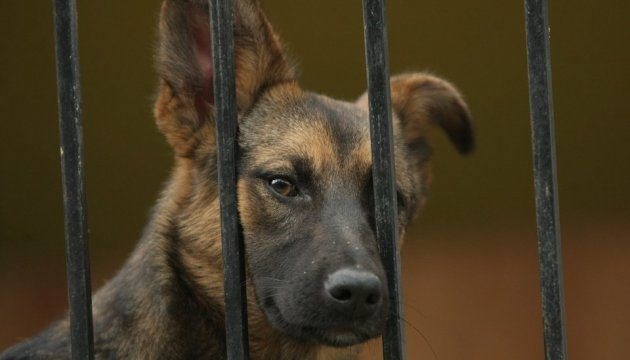 Une salle des visiteurs a été aménagée dans un refuge pour animaux de Kyiv