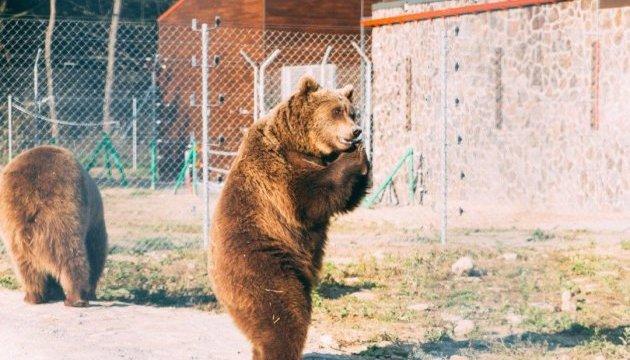 Туристів пустять у новий притулок для ведмедів на Львівщині