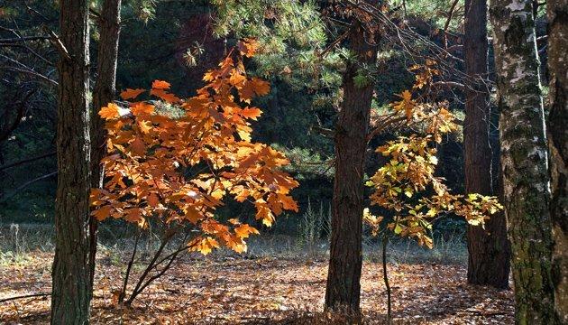 7 жовтня: народний календар і астровісник