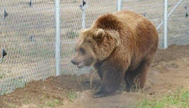 Schutzzentrum für Bären in Gebiet Lwiw - Video