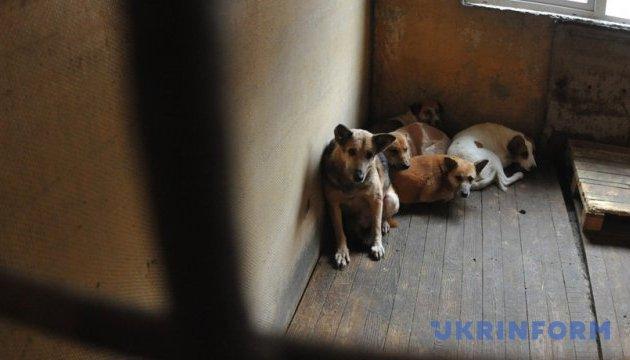 В Николаеве зоозащитники заблокировали работу службы по отлову собак