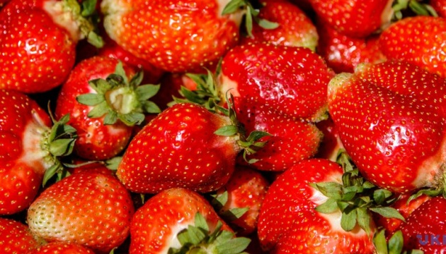 First strawberry festival to be held in Zhytomyr region