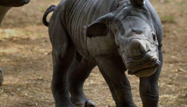 Nace rinoceronte blanco en zoológico británico (Fotos)