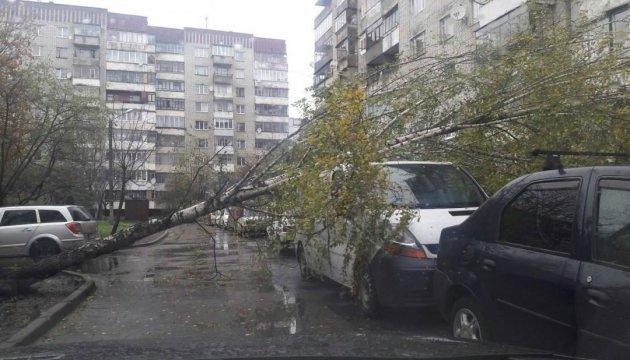 В Львове береза разбила припаркованный автомобиль