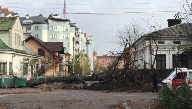 На Прикарпатті буревій повалив 12 дерев, травмована дитина