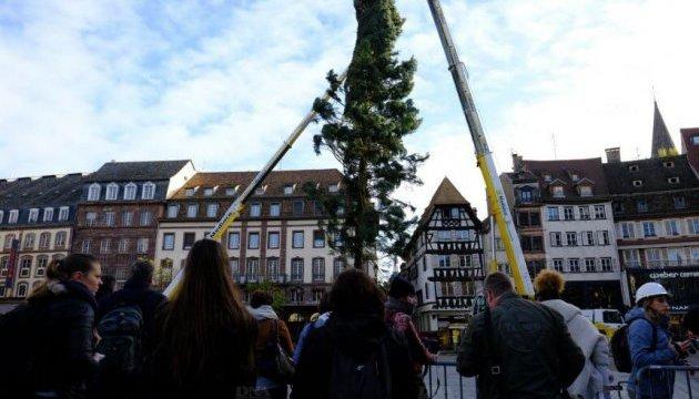 В Страсбурге установили рождественскую елку