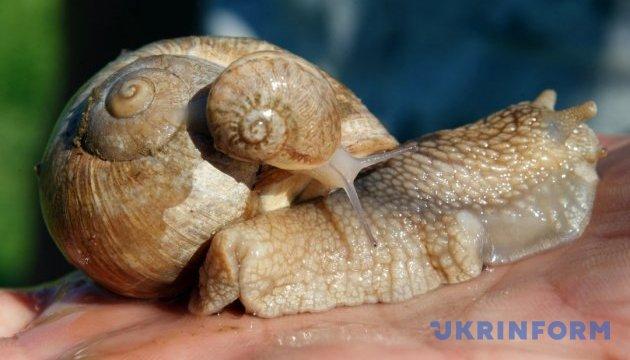 Відвоювати – і розводити равликів