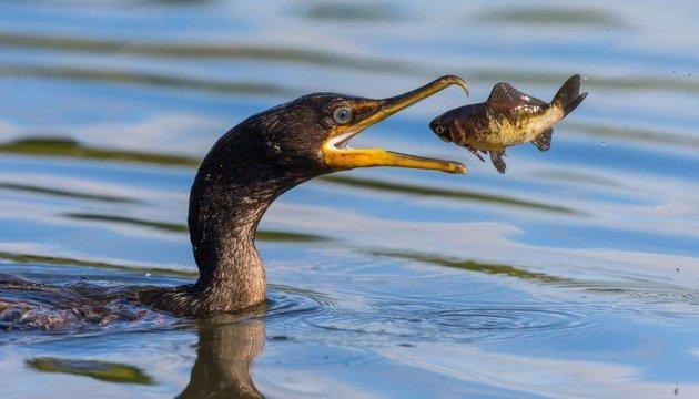 National Geographic показав найкращі фото з усього світу