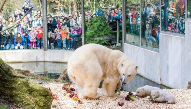 Прогулка по мюнхенскому зоопарку без решеток стала доступна онлайн