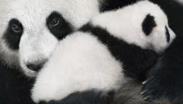 SOS: британский фотограф опубликовал снимки животных на грани вымирания
