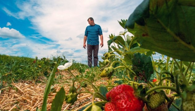 Фермеры должны стать бенефициарами госпрограмм по поддержке АПК - Гройсман
