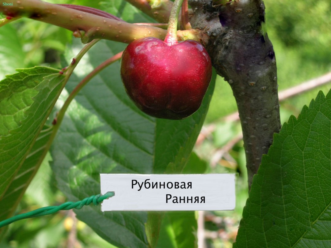 Фото с сайта wolfland.spb.ru