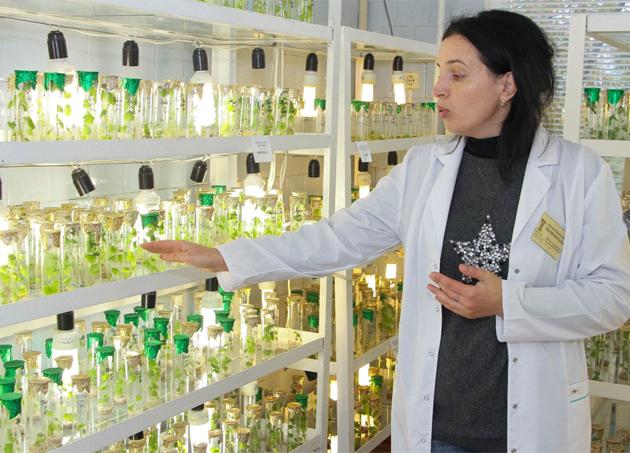 Світлина заступник директора наукового центру Наталія Зеленянська