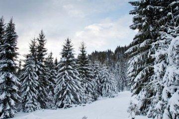 Advierten del peligro de avalanchas de nieve en los Cárpatos