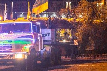Haupt-Neujahrsbaum nach Kiew gebracht - Fotos