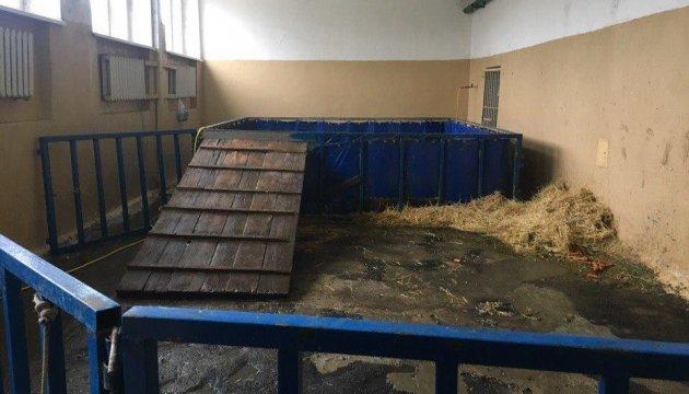 Un lion est mort dans un cirque mobile à Kryvy Rih