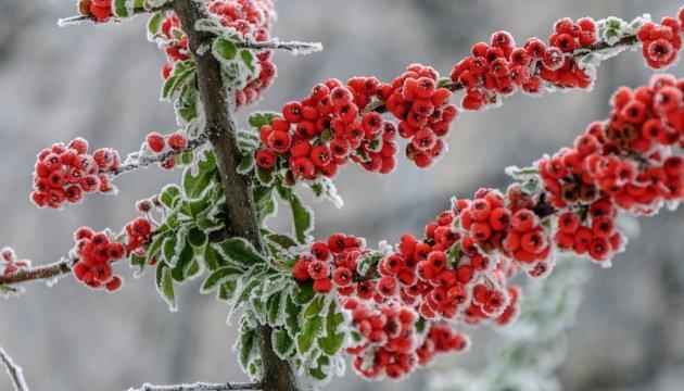 Босх, джаз и котики: открываем сезон зимних выходных