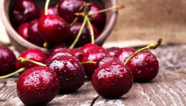 Record sweet cherry crop possible in Ukraine
