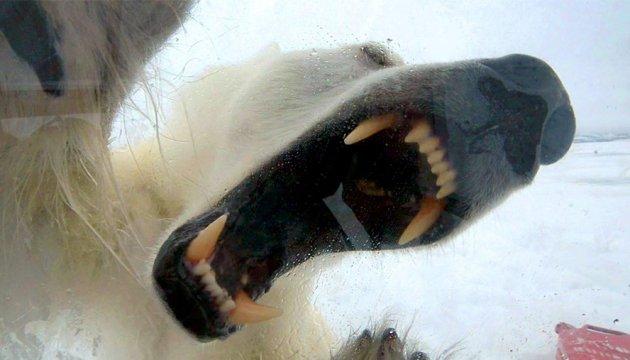 За що комунальники Кропивницького обожнюють «Білого ведмедя»?
