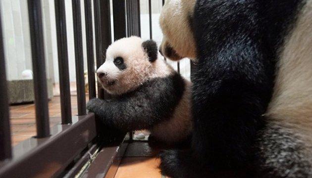У Токійський зоопарк за два дні надійшло 160 тисяч заявок на
