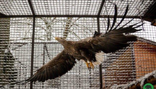 Зоопарк в Луцке сделают более привлекательным за почти 9 миллионов гривень