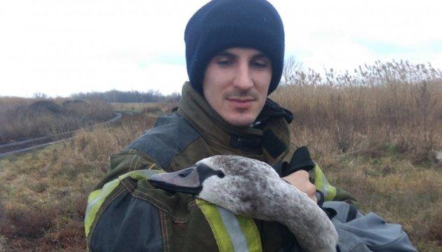 На Донеччині врятували пораненого лебедя
