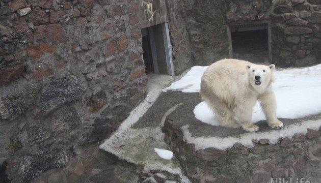 У Миколаївському зоопарку народилося біле ведмежа
