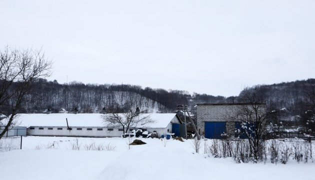 Активісти заявляють про спалах чуми свиней у селі під Києвом