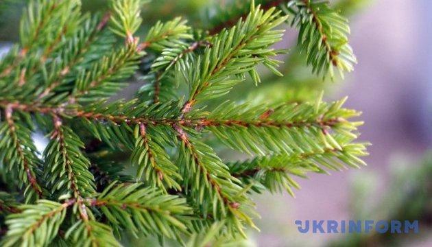 Міс Ялинка-2017: обираємо найкращу зелену красуню України