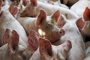 Україна суттєво спрощує процедуру ввезення тварин