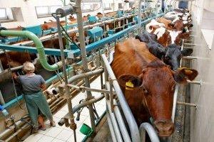 В Україні зменшилось виробництво молока