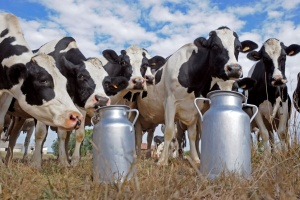 La production de lait en Ukraine a diminué de 3,5%