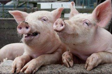 奥地利农民向切尔卡瑟州农业企业投资300万美元