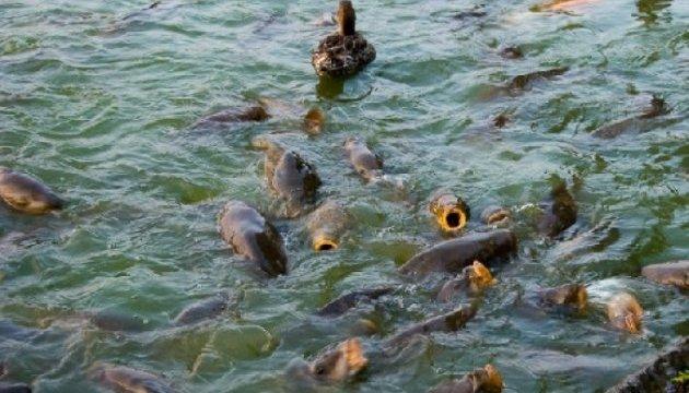 Херсонський рибзавод забруднив грунт нафтопродуктами - Держекоінспекція