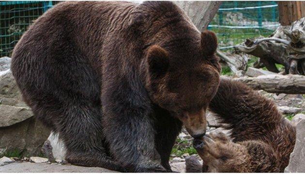 le temps chaud emp che les ours ukrainiens de dormir vid o 17 09 actualit s. Black Bedroom Furniture Sets. Home Design Ideas