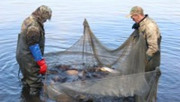 В Каховское и Запорожское водохранилища выпустили более полумиллиона рыб