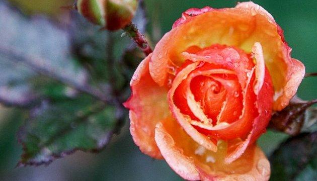 У Запоріжжі посеред зими розцвіли квіти