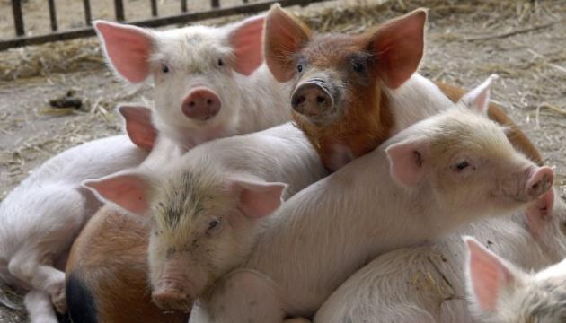 Через АЧС Північна Македонія заборонила імпорт свинини з Сербії