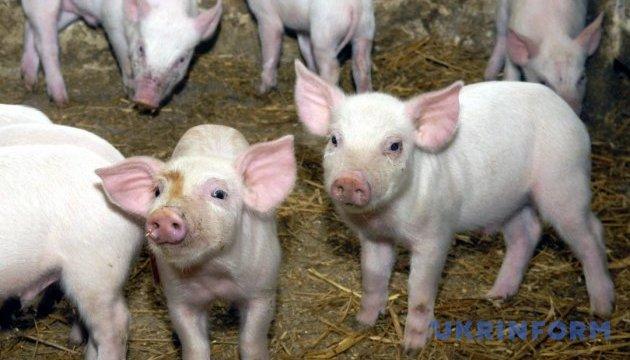 За год сократилось поголовье всех видов сельхозживотных, кроме свиней - Госстат