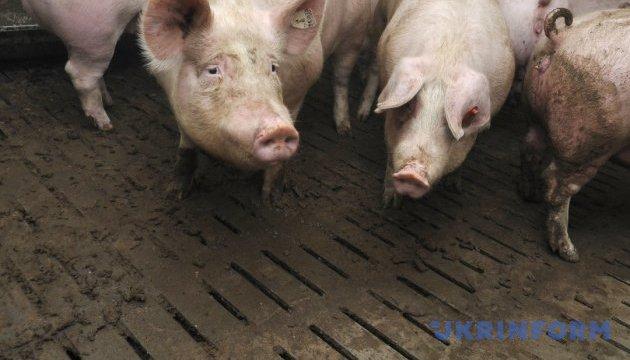 Імпорт свинини до України у І півріччі зріс у понад 8 разів - експерти