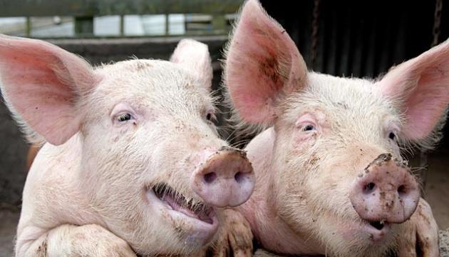 Австрийские производители свинины благодарны России за