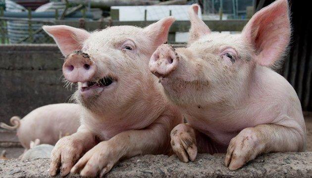 Антибиотики в животноводстве: в Украине стартовало масштабное исследование
