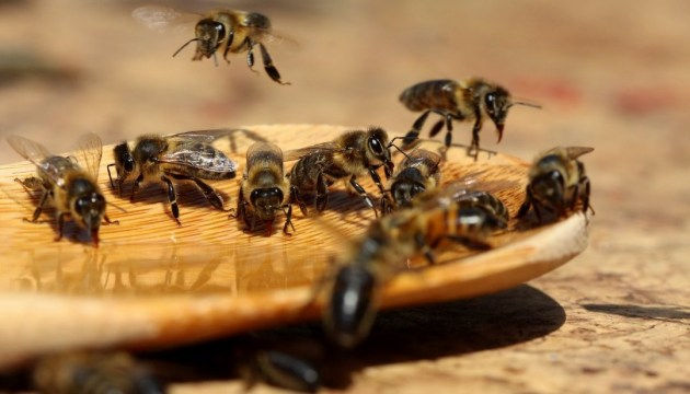 Beekeepers from Poland and Denmark to attend honey festival in Western Ukraine
