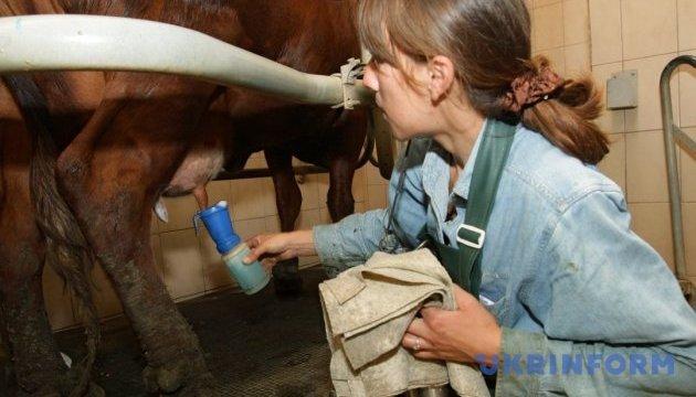 Ціни на молоко залишаються стабільними через дефіцит сировини