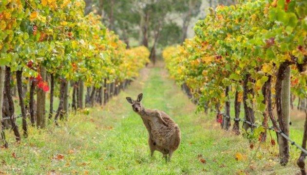 Австралія поскаржилася на Канаду до СОТ за дискримінацію свого вина