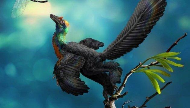 У Китаї відкопали найстарішого динозавра — з райдужним пір'ям