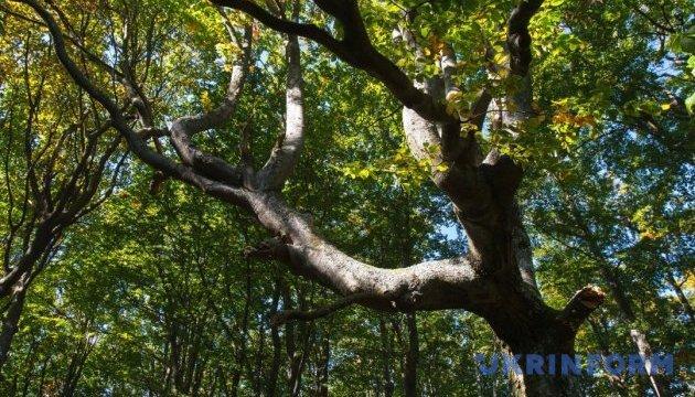 Новые участки карпатских лесов внесли в наследие ЮНЕСКО