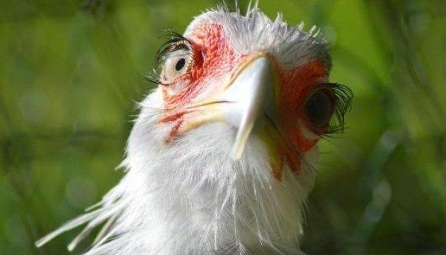 Як антимонопольні підозри українську курку налякали