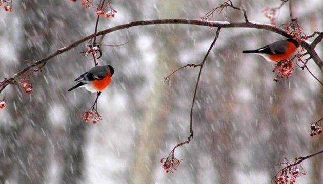 Последний день января принесет в Украину похолодание