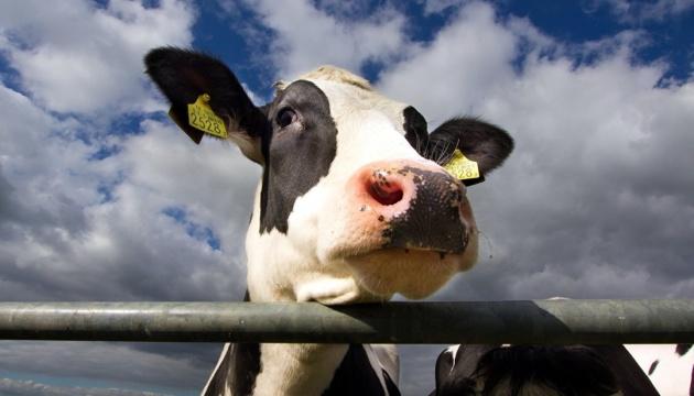 С 4 апреля изменяются правила забоя животных - Госпотребслужба